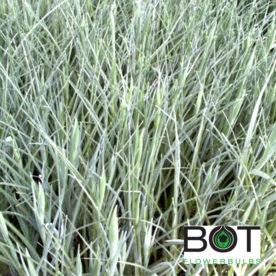 Iris crecimientoinfo